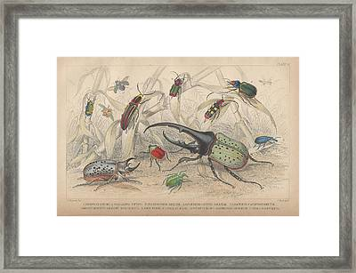 Beetles Framed Print by Dreyer Wildlife Print Collections