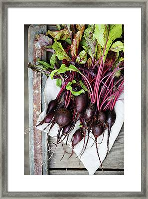 beets in a rustic style by Iuliia Malivanchuk Framed Print