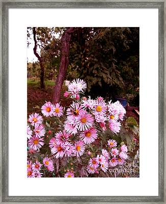Beeze In The Breeze Framed Print by The Stone Age