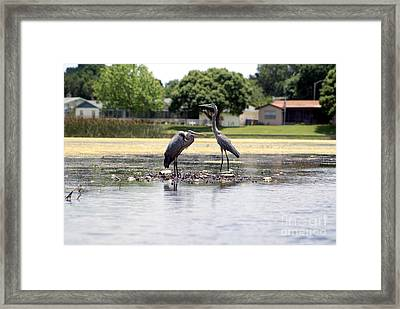 Before And After Framed Print by Jack Norton