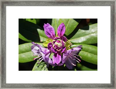 Before, During, And After Framed Print