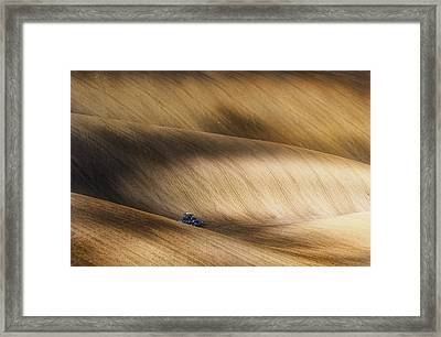 Before Seeding Framed Print