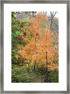 Framed Print featuring the photograph Before The Fall by Deborah  Crew-Johnson