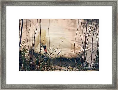 Before The Night Falls Framed Print by Jasna Buncic
