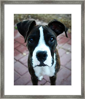 Begging  Framed Print