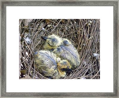 Beginnig Of Ending Framed Print by Aim To Be Aimless