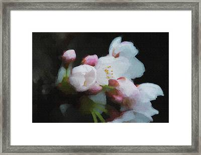 Beginning To Bloom A Good Sign For Spring Framed Print by Dan Friend