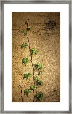 Beginnings Framed Print by Wim Lanclus