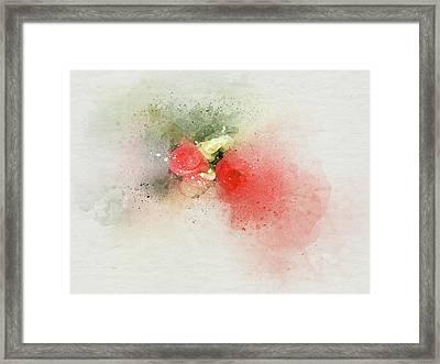 Begonia 3s Framed Print