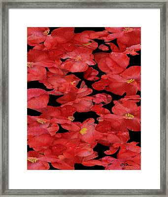 Begonia Discussions Framed Print