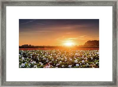 Begonia Farm Framed Print