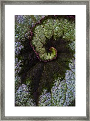 Begonia Leaf Close Up Framed Print by Garry Gay