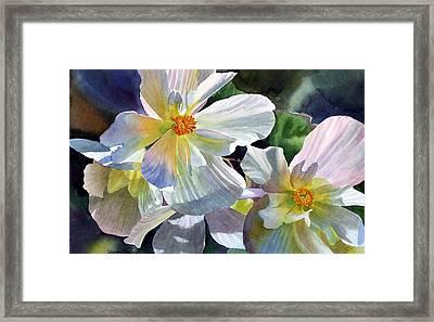 Begonia With Rainbow Shadows Framed Print