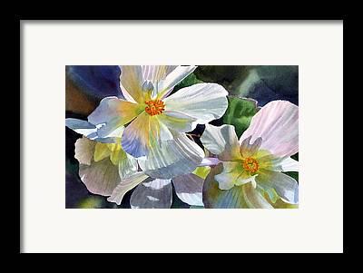 Begonias Framed Prints