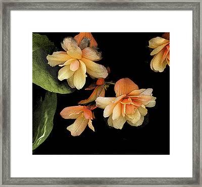 Begonias 2 Framed Print