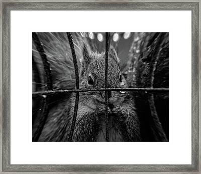 Behind Bars Framed Print by Bob Orsillo