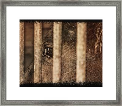 Behind Bars Framed Print by Jim Cook