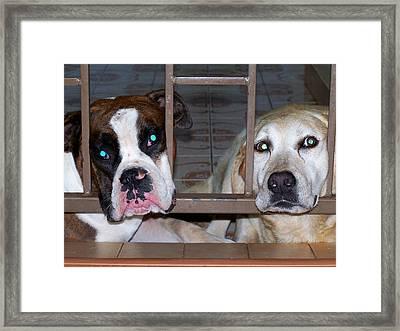 Behind Bars Framed Print by Vijay Sharon Govender