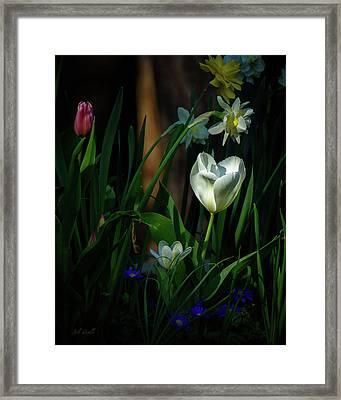 Behind The Garden Wall Framed Print by Bob Orsillo