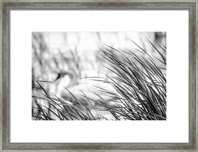 Framed Print featuring the photograph Behind The Grass by Steven Santamour