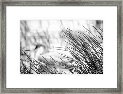 Behind The Grass Framed Print