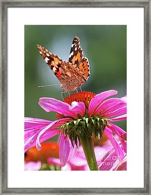 Framed Print featuring the photograph Behind The Painted Lady by Lila Fisher-Wenzel