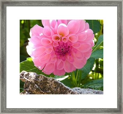 Behind The Rock Wall Framed Print by Christine Belt