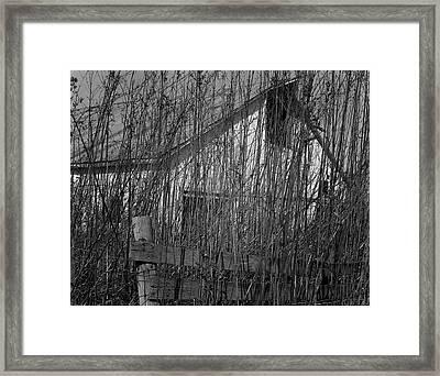 Behind The Weeds  Framed Print by Dennis Sullivan