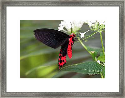 Behold The Batwing  Framed Print