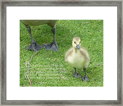 Behold The Gosling Walks Softly Framed Print by Cindy Wright