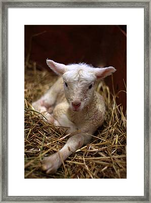 Behold The Lamb Framed Print by Linda Mishler