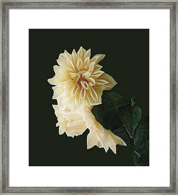 Beige Bold And Beautiful Framed Print by RC DeWinter