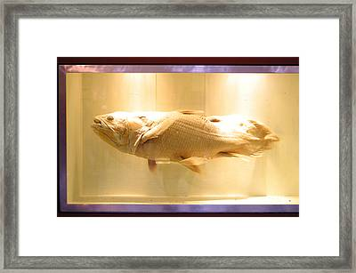 Beige Fish Framed Print by Jez C Self
