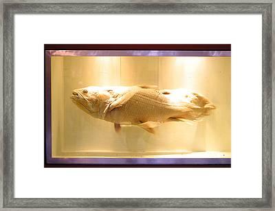 Beige Fish Framed Print by Jez C Self