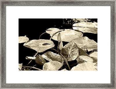Beige Framed Print by Milena Ilieva
