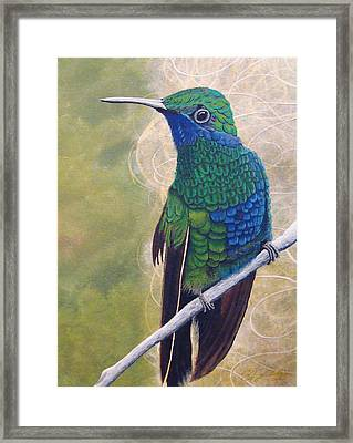 Beija Flor And Nest Framed Print by Jeffrey Oldham