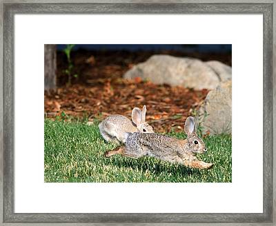 Being Chased By A Blonde Framed Print by Donna Kennedy