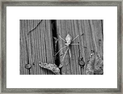 Being Judged  Framed Print