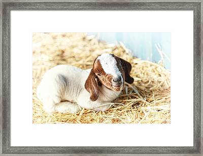 Being New Framed Print by Caitlyn  Grasso