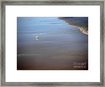 Being One With The Gulf - Cautious Framed Print by Lucyna A M Green