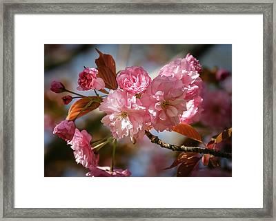 Being Pink - Framed Print