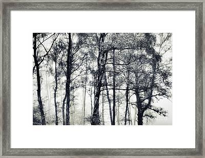 Beithe Framed Print