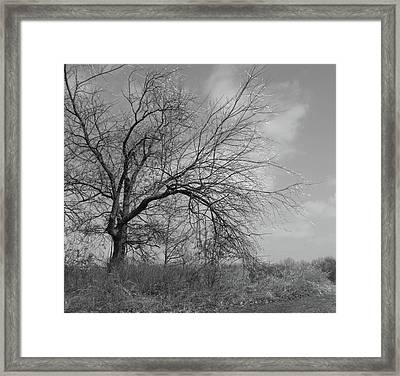 Bejeweled II Framed Print by Anna Villarreal Garbis