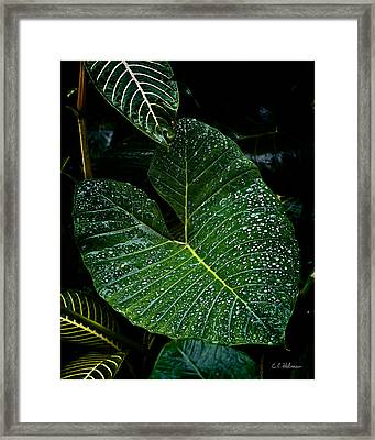Bejeweled Leaf Framed Print by Christopher Holmes
