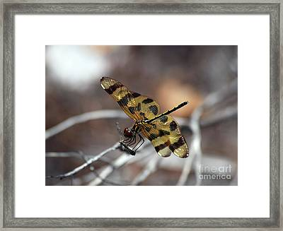 Bejeweled Wings Framed Print