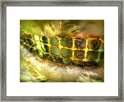 Bejewelled Framed Print by Shirley Sirois
