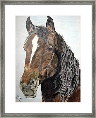 Framed Print featuring the drawing Bela by Melita Safran