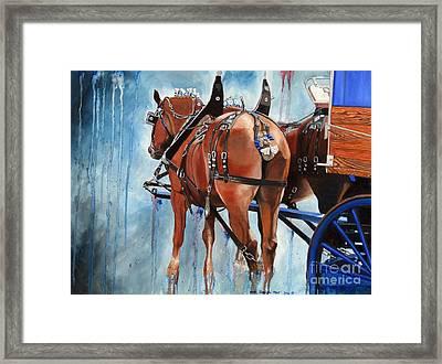 Belgian Blues Framed Print