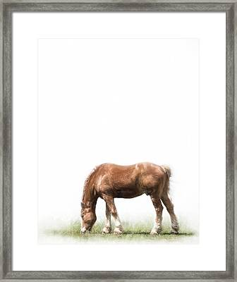 Belgian Horse Framed Print by David and Carol Kelly