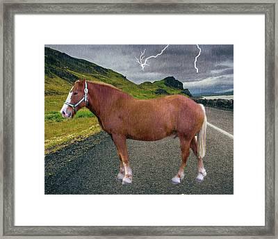 Belgian Horse Framed Print